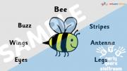 Minibeast Adjectives